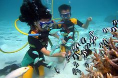 Guam Snuba was created for those who enjoy the simplicity of snorkeling and want to experience the wonders of breathing underwater.  bridging the gap between snorkeling and scuba diving. Snuba divers breathe underwater by means of a 20-foot air line which is connected to a standard scuba tank. The airline allows you to tour underwater near the bottom, at mid-water or on the surface depending on your level of comfort. Contact Real World Diving Guam to make a Snuba reservation