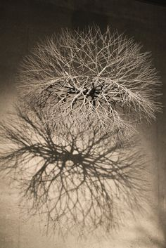 Sculptural art by Japanese American artist–Ruth Asawa at De Young Museum, San Francisco.