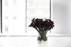 Black Calla Lillies. Love the dramatic, sensuous energy they evoke. Perfect for the bedroom! :)