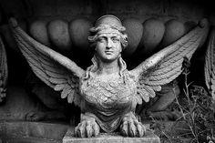 Osborne Sphinx, statue, photo b/w, human head, wings, claws, mix, history, mysterious.