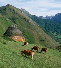 Parque Natural de Redes, Asturias, Spain