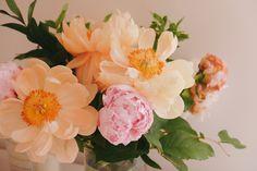 Peonías en estado de máxima floración, ¡Te enamorarán!
