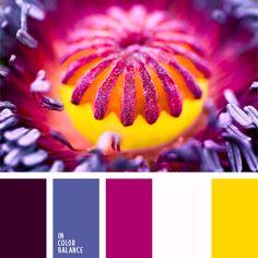 amarillo y carmesí, color berenjena, color fucsia, color malva, colores contrastantes, colores fucsia y berenjena, colores violeta y frambuesa, de color violeta, elección del color, frambuesa, tonos violetas, violeta azulado.