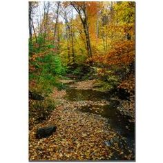Kurt Shaffer 'Autumn Stream' Canvas Art