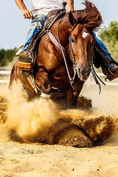 Beautiful reining Quarter Horse captured at full speed doing spins and sliding stops.