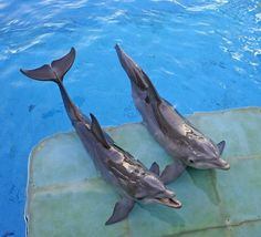Hope, left, and Winter dolphins for dolphin tale 2 whoo hoo!