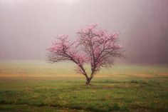 """""""Beautiful Peach Tree in a Fog"""" (Ruther Glen, Virginia) by Jennifer Luck (featured in the Richmond Times-Dispatch on December 6, 2014). Fun Fact: This is a 2014 Virginia Vistas Photo Contest Honorable Mention winner in our Scenic Trees Category. ENJOY!!"""