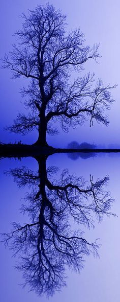✯ Tree Skeleton Reflection