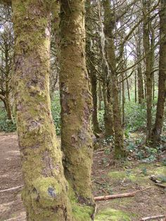 Woods near the Pacific Coast, Oregon, USA Oregon Coast, Pacific Coast, Oregon Usa, Forest And Wildlife, Forests, Wonderful Time, Travel Photos, North Western, Trees