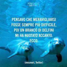 Il 14 aprile è il Dolphin Day, una giornata dedicata alla sensibilizzazione su questo intelligentissimo mammifero che purtroppo, in alcune parti del mondo, viene ancora cacciato.