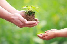 eco-friendly-digest