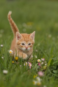 springtime by Regine Heuser - Photo 143240471 - Kittens And Puppies, Cute Cats And Kittens, Baby Cats, Kittens Cutest, Ragdoll Kittens, Bengal Cats, Pretty Cats, Beautiful Cats, Animals Beautiful