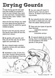 8 Gourd Drying Tips (can be trained to grow in a certain shape, then dried, and used in the garden for deep watering in place of plastic bottles; just bust up and throw in compost bin at end of season! Nature Crafts, Fall Crafts, Diy And Crafts, Art Nature, Kids Crafts, Diy Projects To Try, Craft Projects, Backyard Projects, Craft Ideas
