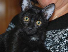 SHANIA - Gato adoptado - Asoka el Grande