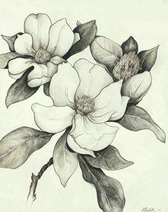Magnolia sketch - tattoo idea