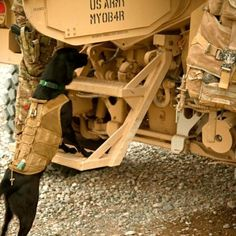 Paris, a military working dog, follows her coalition force handler during a movement to visit Afghan National Security Force partners in Farah province, Afghanistan, Nov. 21, 2012. (U.S. Marine Corps photo by Sgt. Pete Thibodeau/Released)