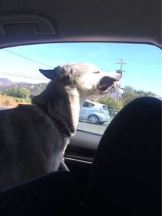 This dog who loves a cool breeze against her gums.   23 Dogs Who've Out-Dogged Themselves
