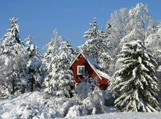 Winter Bungalow in the Pines
