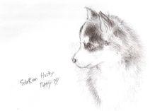 how do you draw Siberian Huskies - Google Search