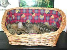 Kedi sepeti