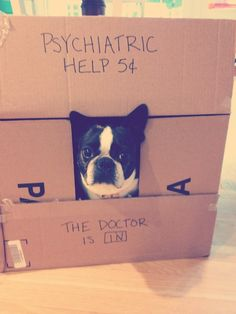 Here is a photo of a Boston Terrier dog named Beanpot. He is available for people who needs psychiatric help for 5 cents.