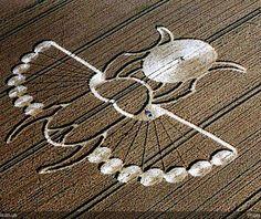 egyptian scarab crop circle 2005 lucy pringle crop circle in east ...