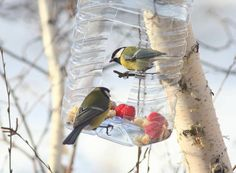 How to Recycle Plastic Bottles for Bird Feeders, Creative Ideas for Recycled Crafts – Lushome