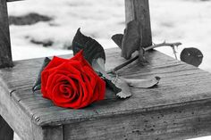 """touchn2btouched:  """" How did the rose  Ever open its heart  And give to this world  All its beauty?  It felt the encouragement of light  Against its being,  Otherwise,  We all remain  Too frightened.  Hafiz  """""""