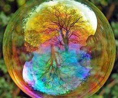 Rainbow bubble tree reflection