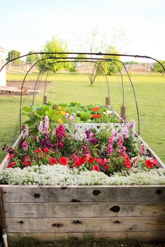 raised beds of flowers too!