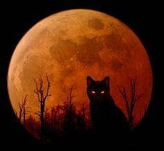 Halloween kitty - Other Wallpaper ID 1218833 - Desktop Nexus Abstract