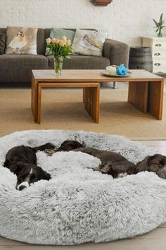 Animals And Pets, Funny Animals, Cute Animals, Happy Animals, Dog Rooms, Pet Beds, Puppy Beds, Dog Houses, New Puppy