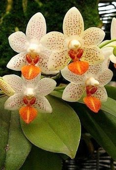 Exotic flowers – Home Decor Gardening Flowers Unusual Flowers, Rare Flowers, Amazing Flowers, Beautiful Flowers, Orchids Garden, Orchid Plants, Indoor Orchids, Orchid Flowers, Flowers Garden