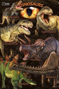 Natural History Museum : Dinosaurs - Maxi Poster x new and sealed Prehistoric Dinosaurs, Dinosaur Fossils, Dinosaur Art, Prehistoric Creatures, Dinosaur Drawing, Dinosaur Photo, Dinosaur Images, Dinosaur Pictures, Natural History Museum Dinosaurs