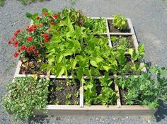 Square Foot Gardening  Square foot gardening is the idea of gardening with small plants. It is a clever approach to food growing. The habit of square foot gardening is so easy to do, adaptable and very easy to manage. It is mainly the production of lots of numbers of plants in one single square box
