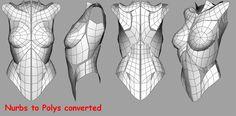 femaletorsopolys.jpg (720×354)