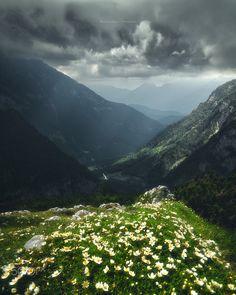 Summer in Austria - null