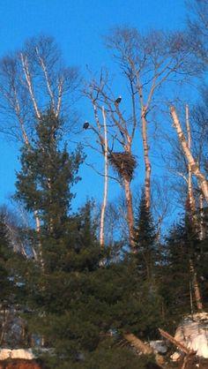 Eagles nest Eagle Nest, Bald Eagles, Hunters, Adventure, Plants, Adventure Movies, Plant, Adventure Books, Planets