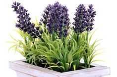 How to Grow Lavender Indoors | DoItYourself.com