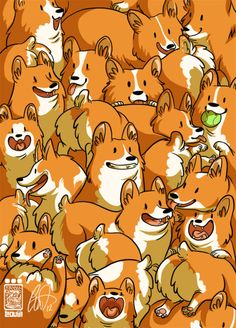 Corgi everywhere