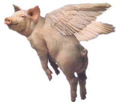 Google Image Result for http://1.bp.blogspot.com/_WMpSC7nK3os/SxLsLPXgchI/AAAAAAAAEOc/Uq_inkmrCbs/s400/flying_pig.jpg