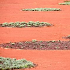 coral sand and desert plants