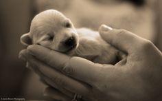 Cute Baby Puppies   Cute-Puppies-puppies-22040942-1280-800.jpg