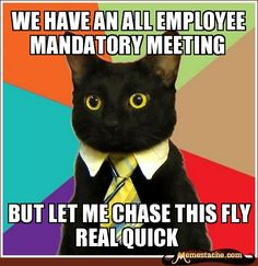 Business Cat - Memestache - One Site. All the Top Memes.