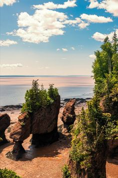 The coolest trees to hug, climb and admire from all across Canada | These beautiful and delicate anchors of our environment are truly something to behold. Beach, Water, Outdoor, Gripe Water, Outdoors, The Beach, Beaches, Outdoor Games, The Great Outdoors