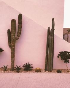 The world is full of cactus, but we don't have to sit on one. Book a bikini and underarm treatment this month and receive a free exfoliating mitten, on us! Cacti And Succulents, Cactus Plants, Instagram Worthy, Photo Wall Collage, Pink Walls, Pink Aesthetic, Decoration, Pictures, Wallpapers