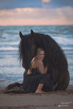 beautiful horse photo