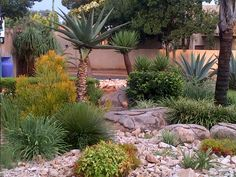 """See 1 tip from visitors to Designer Gardens Landscaping. """"Use Designer Gardens Landscaping to landscape your garden, build you a koi pond, swimming. Palm Trees Landscaping, Front Yard Landscaping, Low Maintenance Landscaping, Low Maintenance Garden, Garden Paving, Herb Garden, Front Yard Garden Design, Drought Tolerant Landscape, Garden Buildings"""