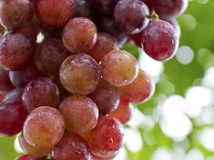 People throughout history have consumed grapes for their potential health benefits. In the beginning of the century, a grape diet was thought to prevent or cure cancer and other illnesses. Grape Nutrition, Spinach Nutrition Facts, Cottage Cheese Nutrition, Coconut Milk Nutrition, Pasta Nutrition, Quest Nutrition, Nutrition Shakes, Holistic Nutrition, Ideas