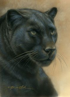 Paintings by international wildlife artist Rebecca Latham. Featuring North American animals, birds, & nature in watercolor painted in miniature. Beautiful Cats, Animals Beautiful, Cute Animals, Big Cats Art, Cat Art, Black Panther Tattoo, North American Animals, Wildlife Nature, Animal Totems